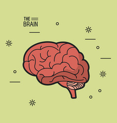Colorful poster of the brain in light green vector