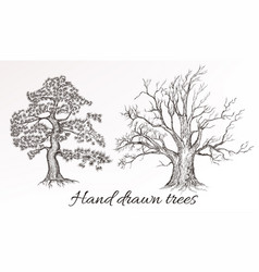 Hand drawn high detailed trees for design vector