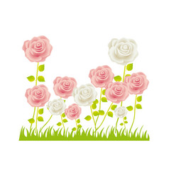 colorful rose bush in pasture floral design vector image