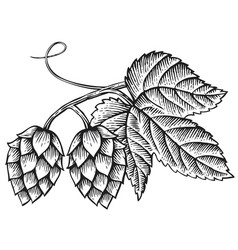hops icon with leaves vintage engraved vector image vector image