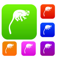 Marmoset monkey set color collection vector