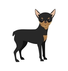 pinscher dog cartoon vector image