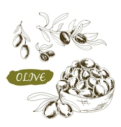 Olive Set of vector image vector image
