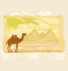camel in egypt desert vector image