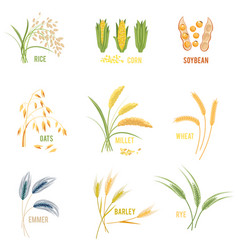 Cereal plants icons vector