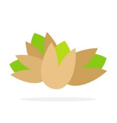 pistachio nuts vector image