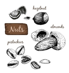 Nuts Set of vector image