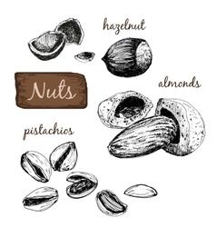nuts set vector image