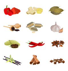 Paprika ginger bay poppy sesame garlic vector image