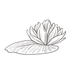 Wild water plant lotus and leaf isolated sketch vector