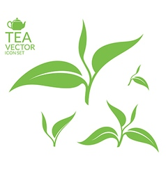 Tea Isolated leaves on white background vector image