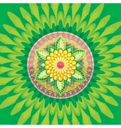daisy flower vector image vector image