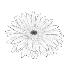 beautiful monochrome black and white gerbera flowe vector image