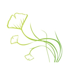 Biloba Plant vector