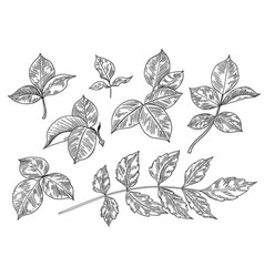 hand drawn monochrome leaves and branches set vector image
