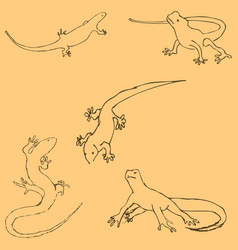 lizards sketch by hand pencil drawing by hand vector image