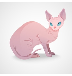 Sphynx cat sitting vector