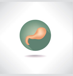 Stomach icon human organ anatomy sign medical sign vector