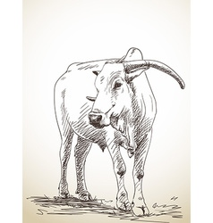 zebu cow vector image