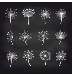 Dandelions chalk sketch on blackboard set vector image vector image