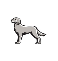 English Setter Standing Side View Retro vector image vector image