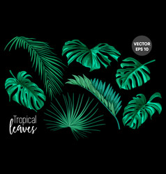 tropical leaves monstera palm set vector image vector image