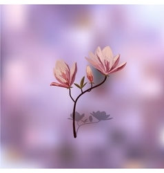 Blossom brunch of pink magnolia vector