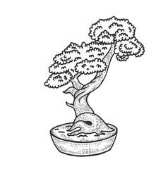 bonsai tree sketch engraving vector image