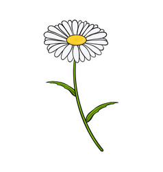 chamomile flower isolated on white background vector image