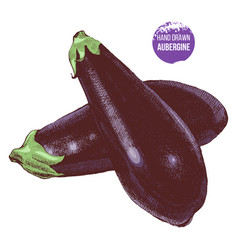hand drawn aubergine vector image