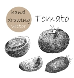 Hand Drawn tomatoes Monochrome sketch vector image