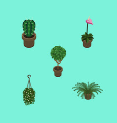 Isometric plant set of grower peyote plant and vector
