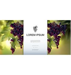realistic organic fresh grapes template vector image