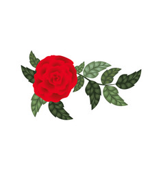 beautiful rose with leafs isolated icon vector image