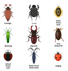 insect icons set beetle bug icon entomological vector image