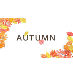paper cut autumn leaves on white background vector image