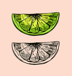 piece lime citrus fruit for making mojito vector image