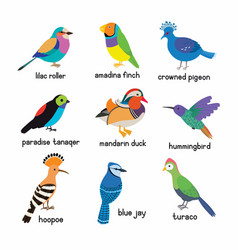 set most beautiful birds on planet vector image