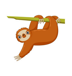 Sloth animal standing on a white background vector