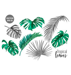 Tropical leaf monstera palm monochrome set vector
