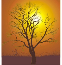 Walnut tree sunset vector image