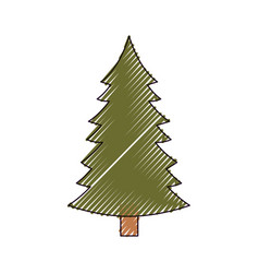 christmas pine with trunk on color crayon vector image