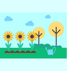 Field with growing sunflowers vector