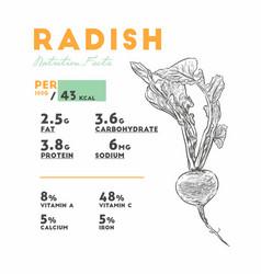 Set of radish health benefits vector