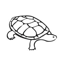 Turtle vector image