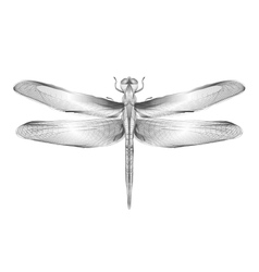 Dragonfly 3d style for print vector image vector image