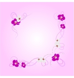 Arrangement orchid flowers vector