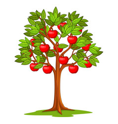 Cartoon apple tree isolated on white background vector