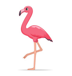flamingo bird on a white background vector image