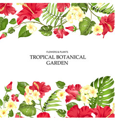 summer vacation card tropical flowers of plumeria vector image